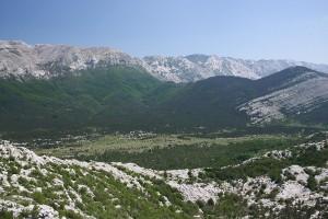 Bojinac3364