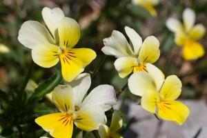 Flower07