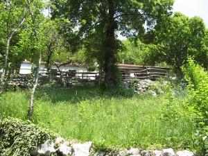 Park2006