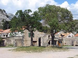 Marasovici2061